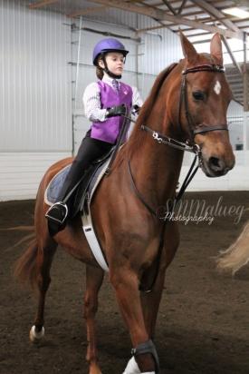 Horses006W