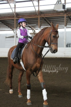 Horses008W